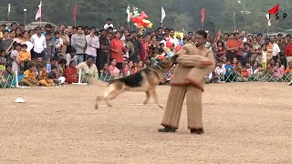 Funny Dogs - Police Dog Show - Dog Videos Compilation 2016 - Funny 2016/17