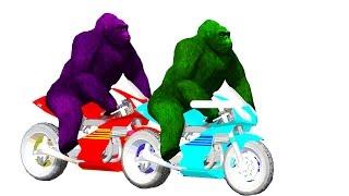 Gorilla Nursery Rhymes - Gorilla Riding Bike Kids Songs| Funny Colourful Rhymes - TSP Kids Rhymes