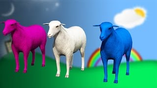 Baa Baa Black Sheep and Many More Kids Rhymes - Popular Nursery Rhymes Collection by TSP Kids Rhymes