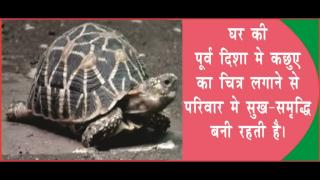 Tortoise brings money luck. #acharyaanujjain होगी कछुए से धन की तंगी दूर,