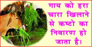 Astrology tip of the day. #acharyaanujjain चमकेगी किस्मत, करे वास्तु &#231