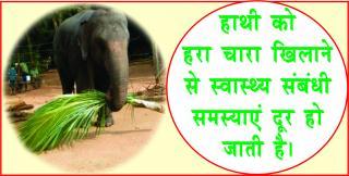Evil Destroyer Lord Ganesha. #acharyaanujjain गणेश जी होंगे प्रसन्न, करे &