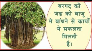 RemediesTalismans by Root of Tree. #acharyaanujjain होगी परेशानी खत्म, पेड-पौ&#2