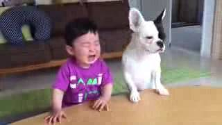 Childrens New Funny Videos - 2016 Kids and dogs funny videos - Latest Funny Videos