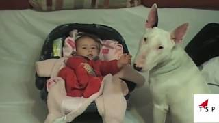 Top 10 Funny Baby Videos 2017 - Top Funny Dogs And Children Funny Videos with your kids