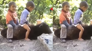 Top Whatsapp Funny Videos 2017 - New indian funny videos - Best Funny Indian Fail Compilations