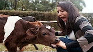 Funny Viral Video Part 7 | Best New Funny Videos 2017 | Best Funny Fails Compilations | Prank Videos