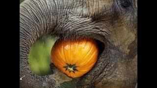Elephant feeding in kerala