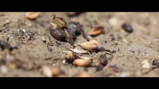3 साल प्रचार, लीपापोती सरकार : किसान विरोधी, नरेंद्र मोदी
