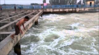 People are Awesome - India - Students diving in the Ganga canal