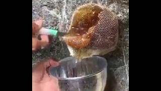 பாக்கும் போதே எச்சில் உறுதே. - Amazing Way to get Honey