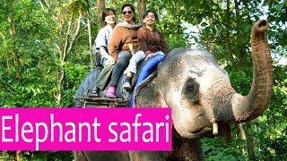 safari elephants - biggest slaves on earth