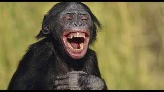 Funny Monkey Funny Animals Amazing Videos