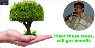 #Plant these trees, will get benefit.