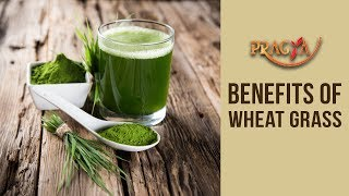Health Benefits Of Wheat Grass- Dr. Vibha Sharma (Ayurveda & Panchkarma Expert)