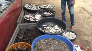 Fresh Fish in Kerala - Fish Vendors of  Kerala | Indian Street Food