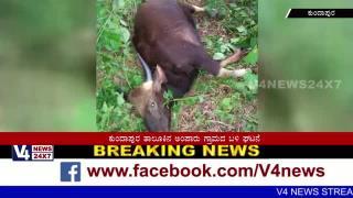 Killed 2  Wildfire in Kundapura