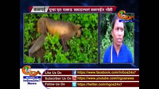 Panic grips Valpoi after monkey found dead