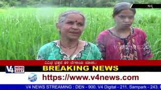 Paddy cultivation and  Traditional life in Sullia