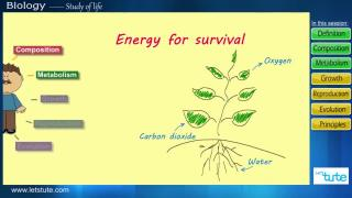 Introduction to Biology | Letstute