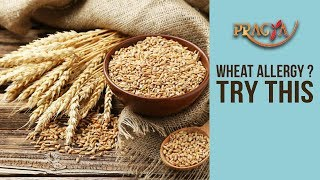 WHEAT ALLERGY? Time To Switch To An Alternative Food | Dr. Deepika Malik (Dietician)