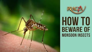 How To Beware Of Monsoon Insects | Dr. Shehla Aggarwal