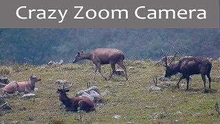 World Record Ultra zoom Camera - Nikon P 900 - 83x 2000 mm zoom