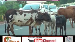 Will Stop 'Stray Cattle Fund' if Panchayat & Municipality Don't Act: Mauvin