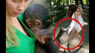Monyet Dan Manusia Bikin Ngakak