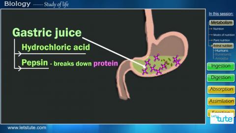 Nutrition in humans | Letstute