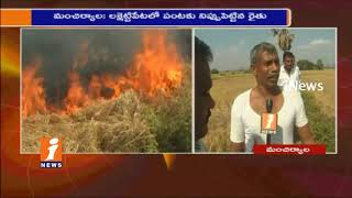 Chadram Farmer Openly Burnt Paddy Crop After Infected With Disease | Mancherial | iNews