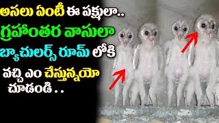 Aliens Found in a Construction Building at Visakhapatnam2017 | New Aliens Found | Aliens Viral Video