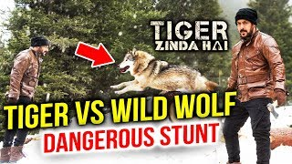 Salman Khan To FIGHT With Dangerous Wolf In Tiger Zinda Hai
