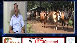 Goa Facing Shortage of 2Lakh Liter Milk, Mauvin Urges Youth to take up dairy farming