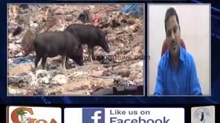 Its Pigs Vs Cows in Mormugao Municipal Council