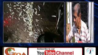 Fish In Goa Washes Ashore At Various Places, In Goa Finds Out Why