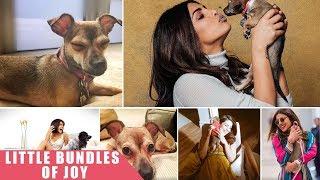 #CelebPetstagram: Meet Priyanka Chopra's Cutesy Pets