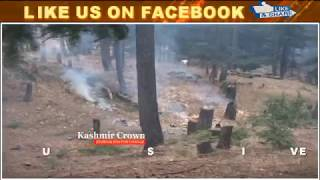 Forest Timber Loot In Sopore: Forest Officials Clueless. Kashmir Crown​ Reports