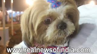 Ped Fed Dog Show in Mumbai 2017