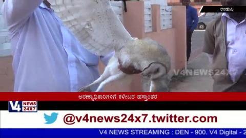 Rare bird White owl (Snowy owl) death at udupi.