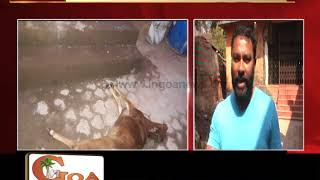 Calf Killed For No Reason By Man Named Datta In Ponda