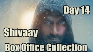 Shivaay Box Office Collection Day 14