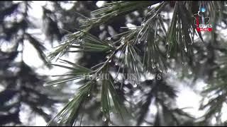 Rain ends dry spell in Jammu, fresh snowfall on higher reaches