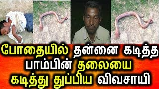 தன்னை கடித்த பாம்பின் தலையை கடித்து துப்பிய விவசாயி|Tamil News Today|Viral video