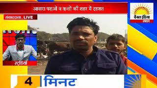 आवारा पशुओं व कुत्तों की शहर में दहशत #Channel India Live