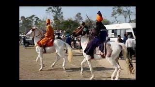 होले–मोहल्ले के राष्ट्रीय त्यौहार पर 'गलैंडरज' बीमारी का खतरा !
