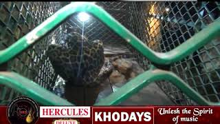 Another Leopard Falls Into Well At Thane-Sattari, Rescued