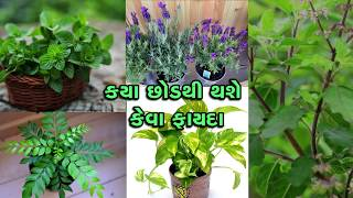 Khabarchhe recommends having these plants in your house to purify the air and other amazing reasons