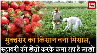 मुक्तसर का किसान बना मिसाल, स्ट्राबरी की खेती करके कमा रहा है लाखों