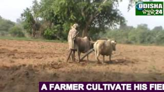 FARMERS CULTIVATION